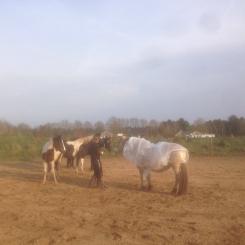Orin, Lana en Linnet.